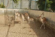 Zoo At Rani Empire
