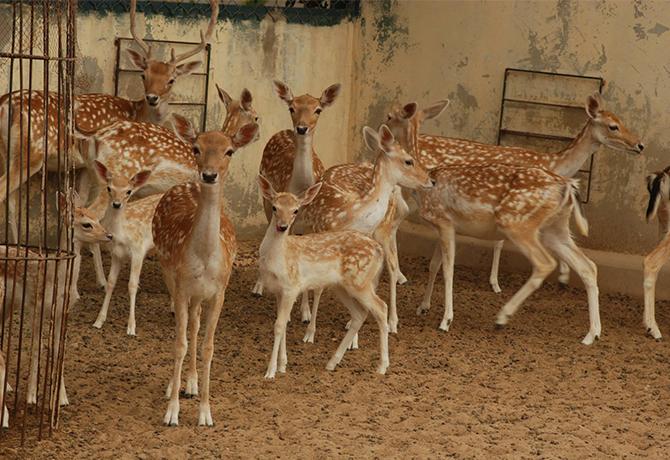 International Zoo Rani Empire